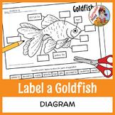 Label a Fish Diagram - Parts of a Fish Labeling - Goldfish