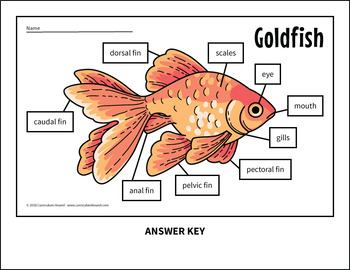 Label a Fish Diagram - Parts of a Fish Labeling - Goldfish by Curriculum  HoundTeachers Pay Teachers