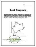Photosynthesis: Label a Leaf Diagram