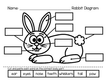 Label a Rabbit - DIFFERENTIATED DIAGRAMS!