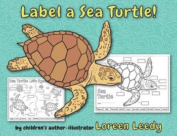 Label a Sea Turtle! {Body Parts Diagram} by Loreen Leedy   TpT
