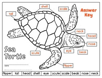 Label    a Sea Turtle   Body Parts    Diagram     by Loreen Leedy   TpT
