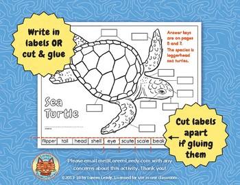 original 836966 2 label a sea turtle! {body parts diagram} by loreen leedy tpt