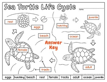 Label    a Sea Turtle      Body       Parts       Diagram     by Loreen Leedy   TpT