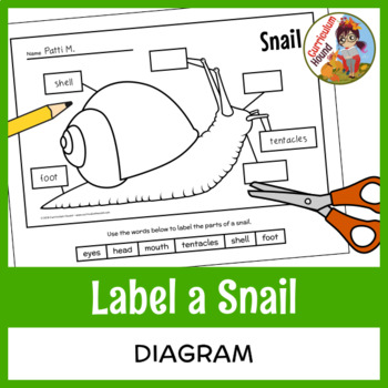 Label A Snail Teaching Resources Teachers Pay Teachers