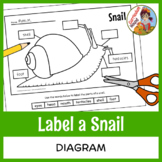 Label a Snail Diagram - Parts of a Snail Labeling