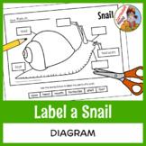 Label a Snail Diagram - Parts of a Snail Labeling