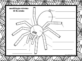 labeled spider diagram 2010 chevy malibu 2 4 labeled engine diagram {free} label a spider ~ etiquetar la araña [dual immersion ...