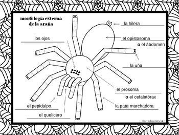 {Free} Label a Spider ~ Etiquetar la araña [Dual Immersion]