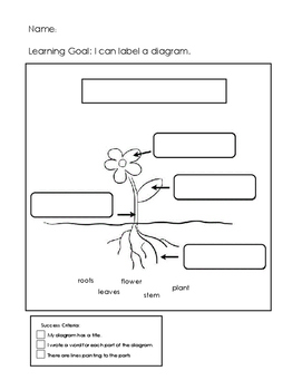 Label a diagram: Plant