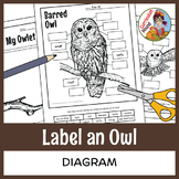 label an owl diagram - parts of an owl labeling - 2 designs + prompt!