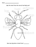 Label and Color an Insect