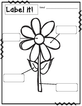Label it! Spring Themed Literacy Activity {Label a Flower}