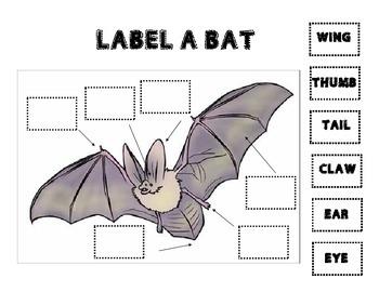 Label parts of a bat
