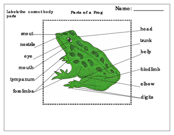 Label parts of an Amphibian:Frog