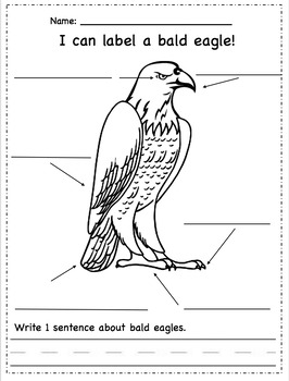 Bald Eagle Activities, Worksheets, Printables, and Lesson Plans