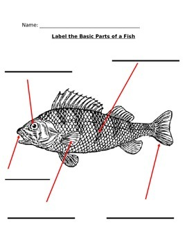 Label the Basic Parts of a Fish