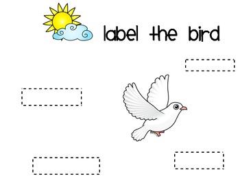 Label the Bird