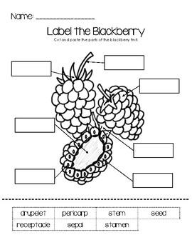 Label the Blackberry Worksheet