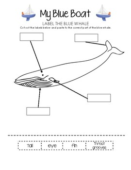 Label the Blue Whale