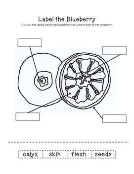 Label the Blueberry Worksheet
