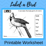 Label the Body Parts of a Bird (Printable Worksheet)