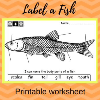 Label the Body Parts of a Fish (Printable Worskheet)