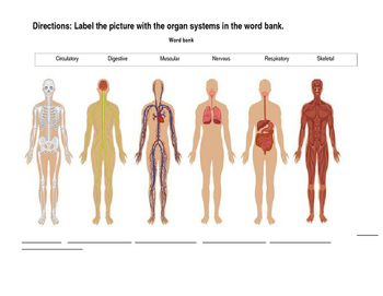 Label the Body Systems