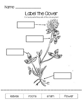 Label the Clover Worksheet