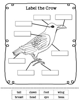 Label the Crow Worksheet