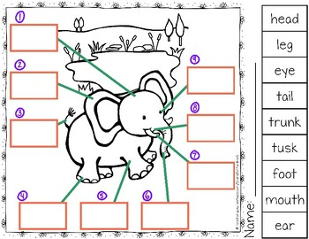 Label the Elephant
