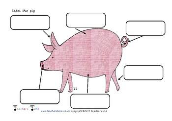 Label the Farm Animal