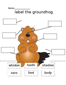 Label the Groundhog