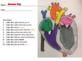 Label the Heart Worksheet