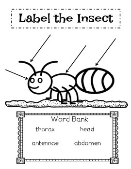 Label the Insect