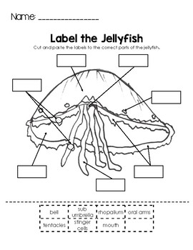 Label the Jellyfish