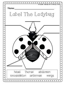 Ladybug Label It