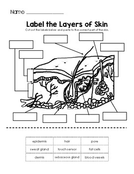 Label the Layers of Skin