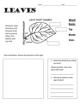 label a leaf teaching resources teachers pay teachers label the diagram of a leaf and its internal structure label the leaf label the leaf