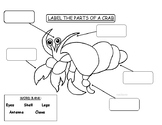 Label the Parts of a Crab