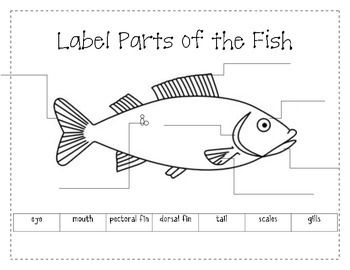 Label the Parts of a Fish