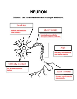 Label the Parts of a Neuron by Annette Hoover   Teachers Pay Teachers