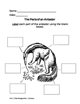 {Label the Parts of an Anteater}