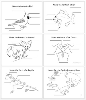 Label the Parts of the Animals