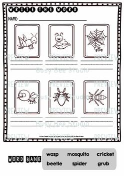 Label the Pictures Worksheets | Bugs