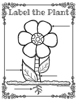 Label the Plant
