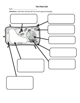 Plant cell worksheet label parts