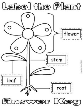 Label the Plant Cut & Paste Worksheet {FREEbie} by The Treasured ...