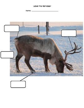 Label the Reindeer