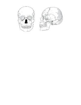 Label the Vertebra, Spine and Skull